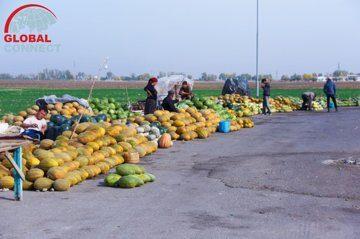 Мирзачульский рынок дыни и арбуза